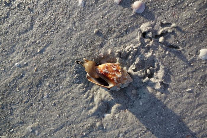 low tide shells-2.jpg