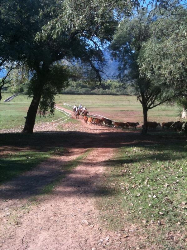 Herd riders.jpg