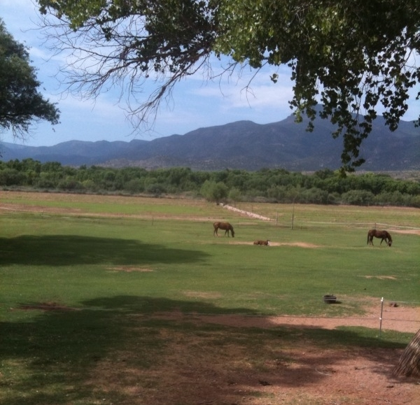 Just one of our many beautiful pastures with happy horses.
