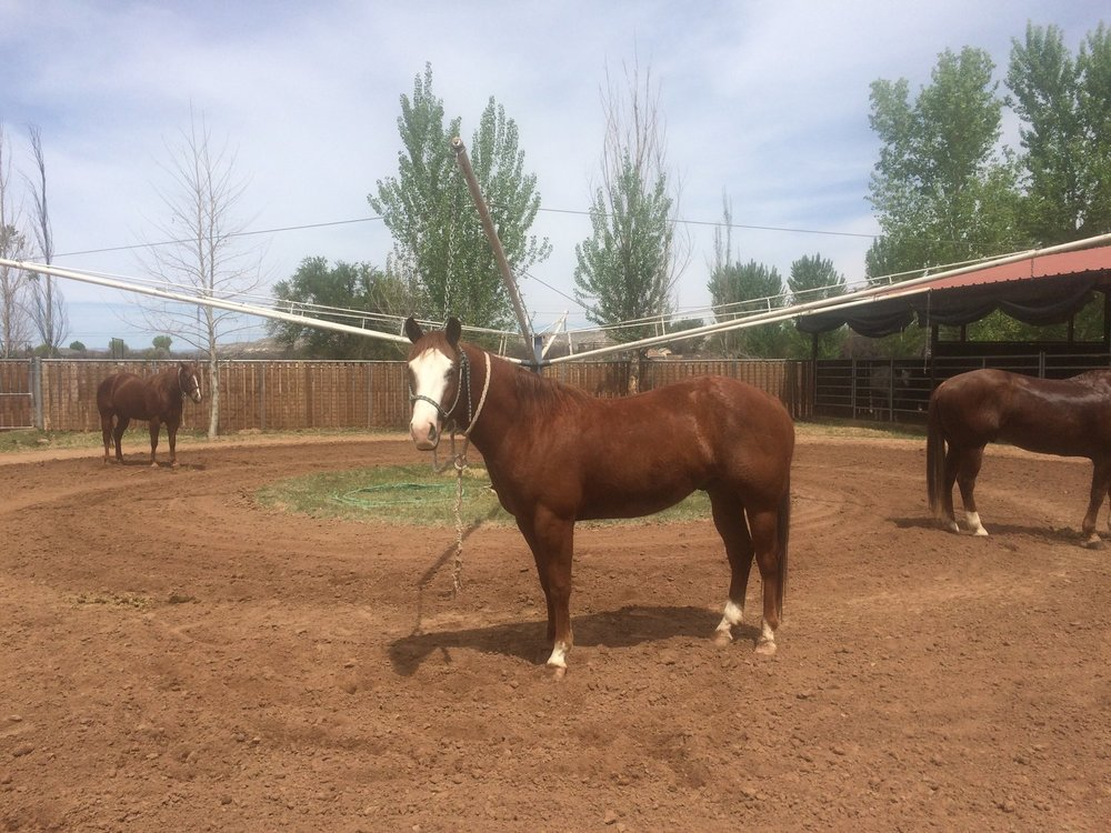 Our facility is designed to provide the best in equine rehab.