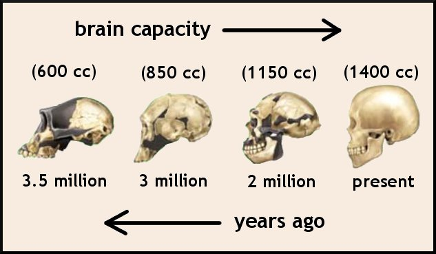 brain_evolutionjpg.jpg
