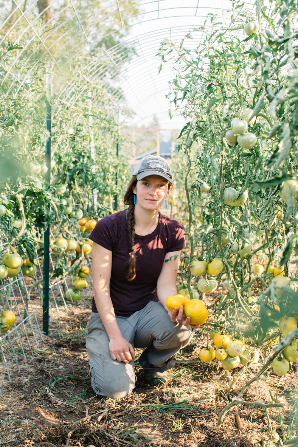 Stasia Orkwiszewski, manager of the University of Montana's newly-planted South Ave. Garden, holds yellow heirloom tomatoes under a tomato trellis. The tomatoes were later sent to UM's Food Zoo for students to eat as part of the university's Farm to Table program.