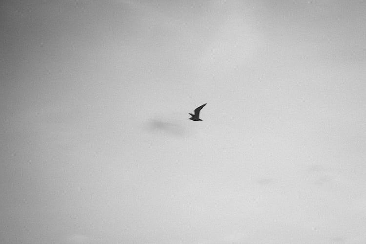 minimal-bird-emilymargaret