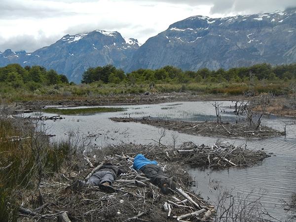 Art, science, and uselessness in Tierra del Fuego: A conversation with Camila Marambio by Catalina Jaramillo