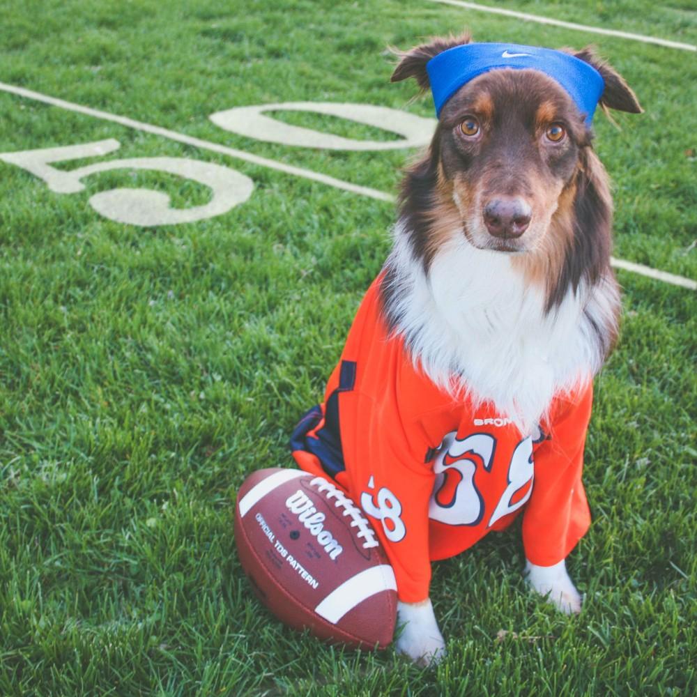 Hobbes_Broncos.jpg