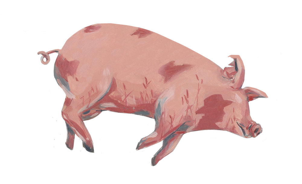 Death of a pig