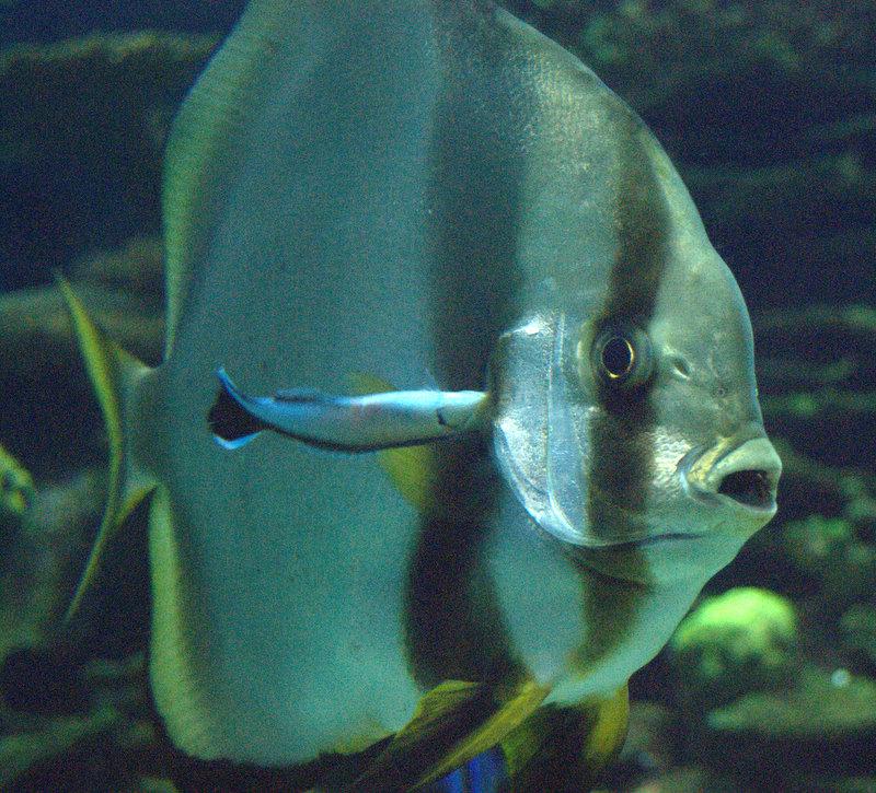 Un pez (rayado, a decir por su estética)