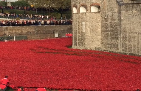 Poignant poppies : Nearly 900,000 ceramic poppies have been planted in the moat at the Tower of London