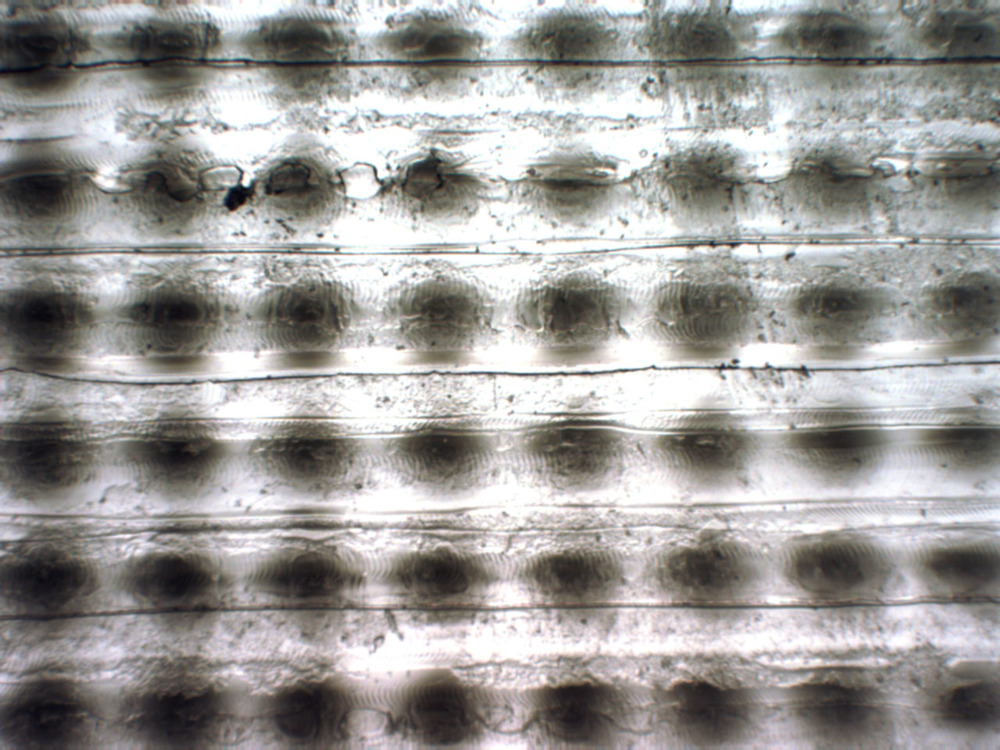 Closeup of printed half-tone pattern. Magnification levels range from x80 to x200.