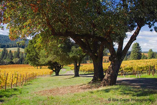 ( ANDERSON VALLEY IN AUTUMN )