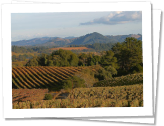 The wine growing area just north of Healdsburg is known as the Dry Creek Valley, home of 50 wineries. Dry Creek Valley is one of California's most prominent producers of Zinfandel.