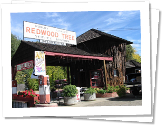 """Ukiah is the County Seat of Mendocino County and a real old country town. Visit Orr and Vichy Hot Springs and the """"World's Largest Redwood Tree Service Station"""" and is built largely from a massive section of Sequoia."""