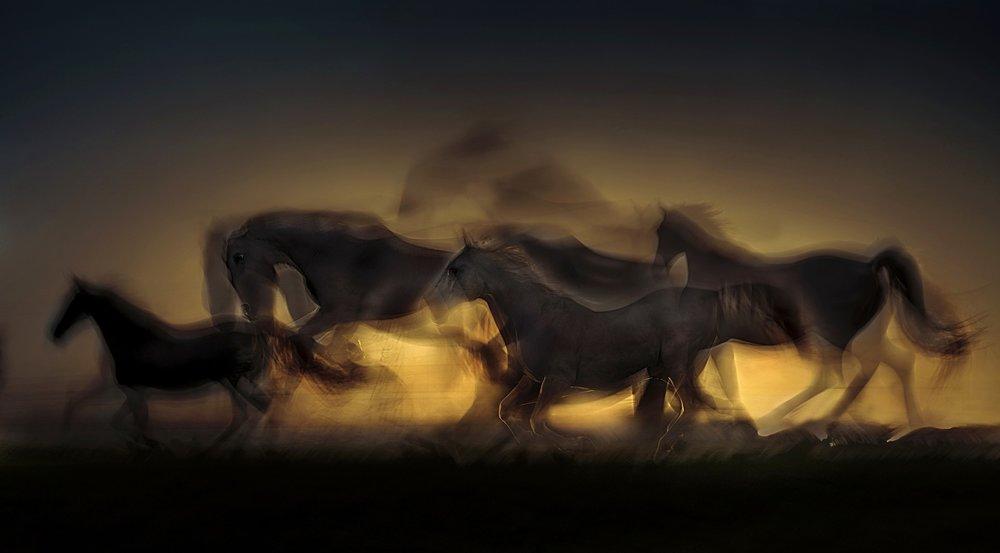 horse-2063742_1920.jpg