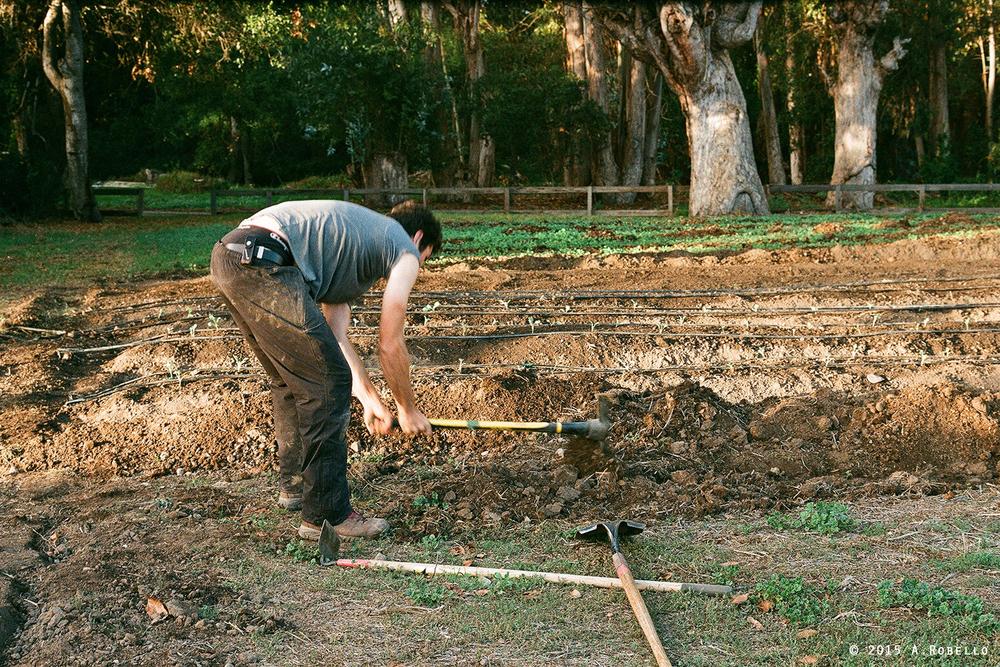ROLL0ivylaneNOBORDER2015(farmer).jpg