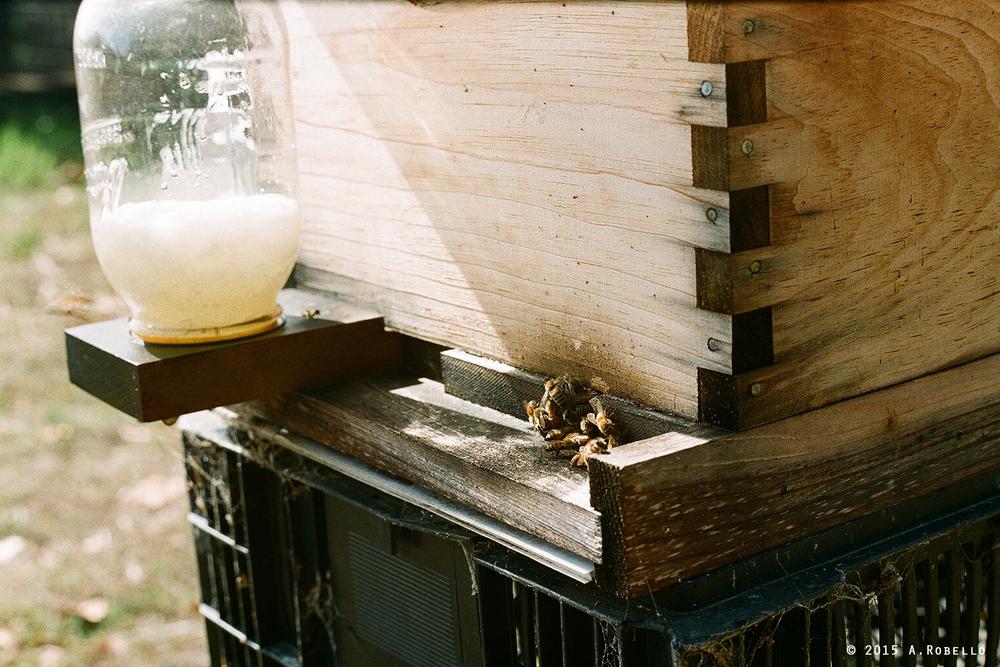 ROLL0ivylaneNOBORDER2015(hive).jpg