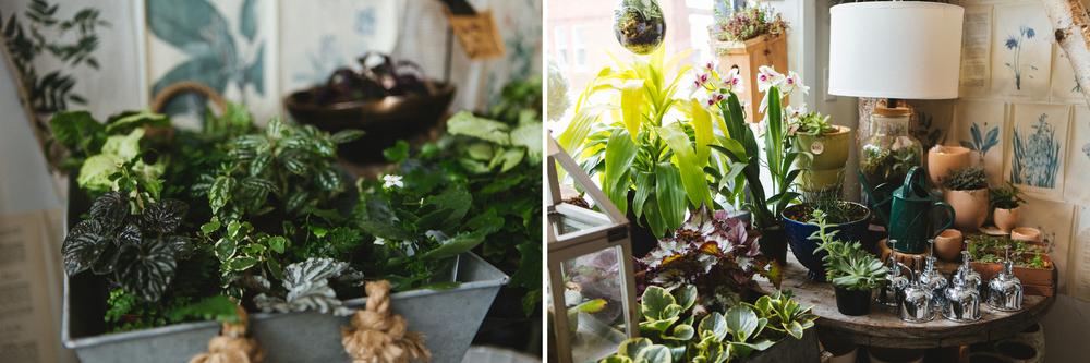 Flora: Asheville // www.kristalajara.com