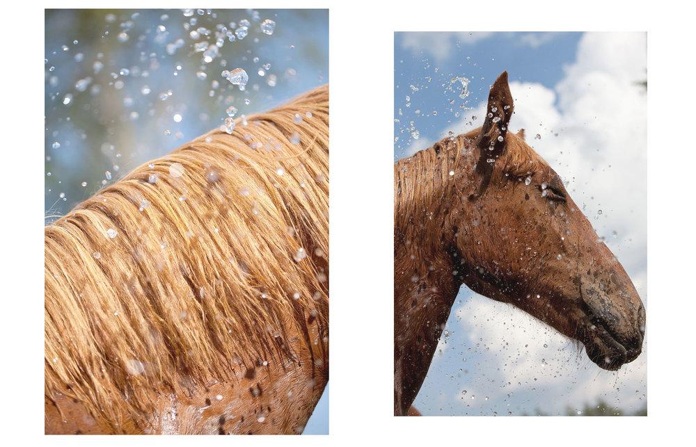 horsewhite.jpg