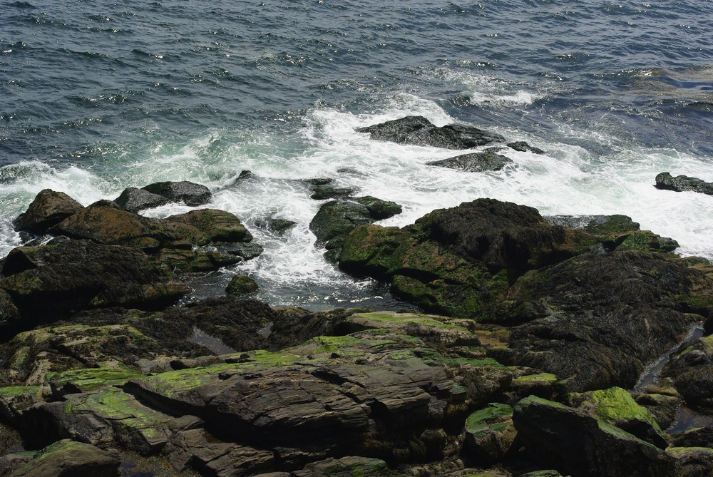 Prout's Neck Cliff Walk