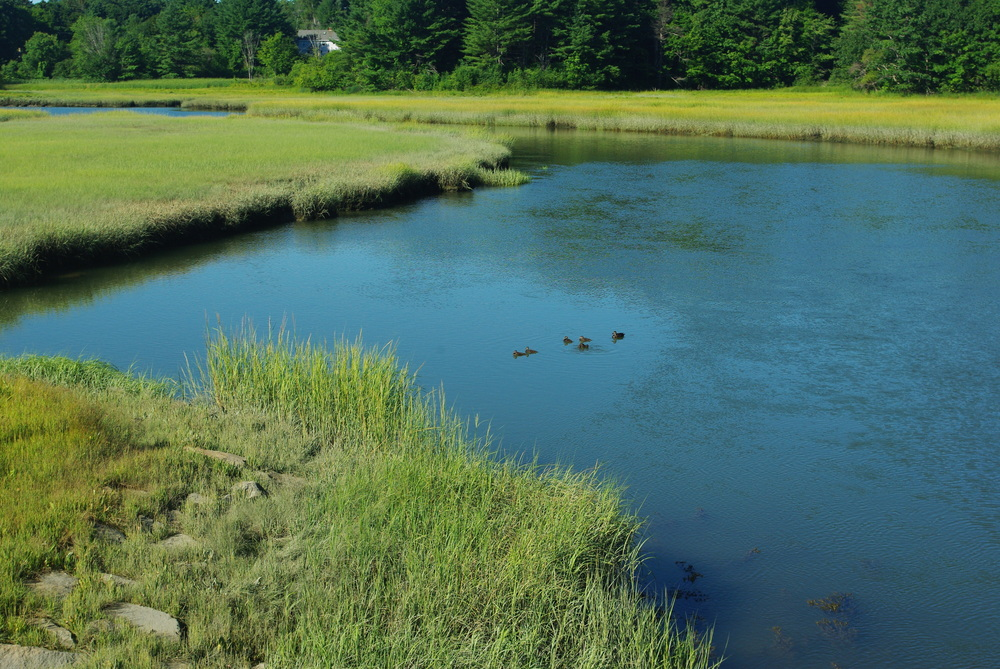 Fore River Sanctuary