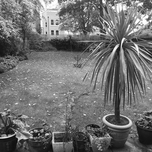 The garden as grey as the weather in London. Back to bed rap up😁