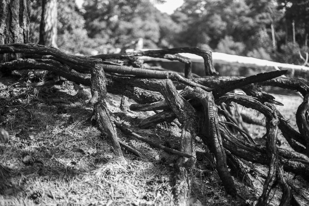 Leica M Monochrome Blog -1009311.jpg