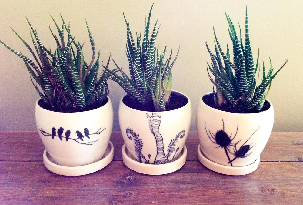 Planters 01.jpg