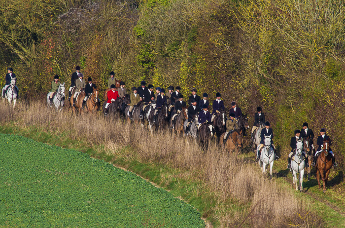 Part of the hunt field this morning - nearly 50 horses, with beautiful morning sunlight!