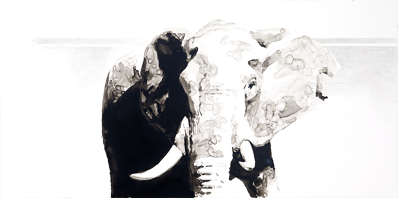 Ink Fragments, Elephant