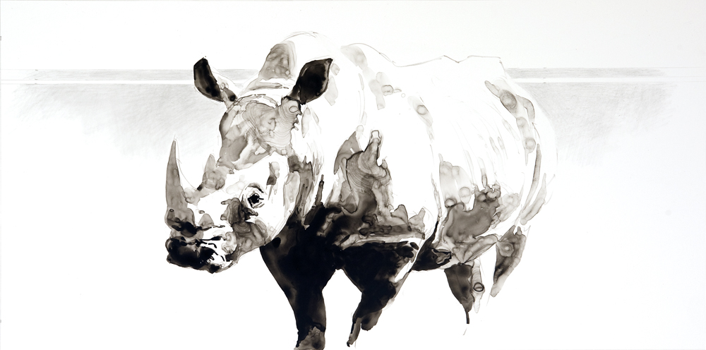 Ink Fragments, Rhino