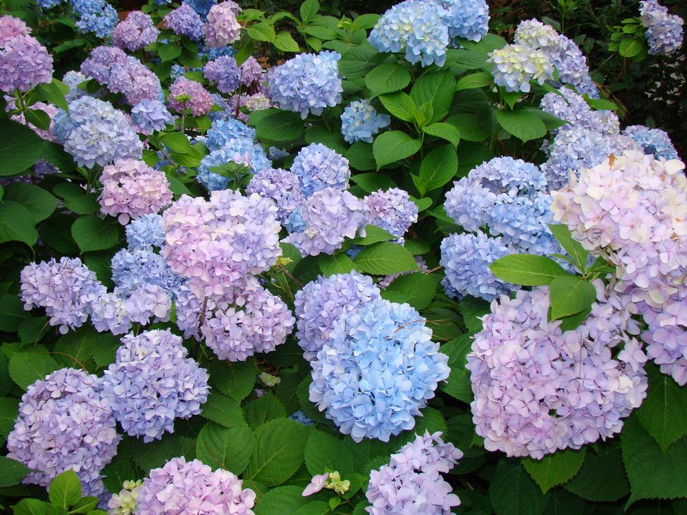 3-may 2012 025.JPG
