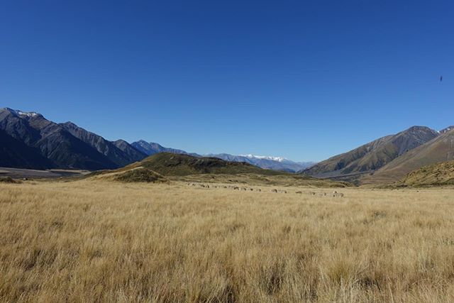 High country farming is an interaction between nature, our animals and our people. In a fragile but often harsh environment this interaction must be carefully managed and balanced. #highcountryfarmers #workingwithnature @icebreakernz @nzmerinoco