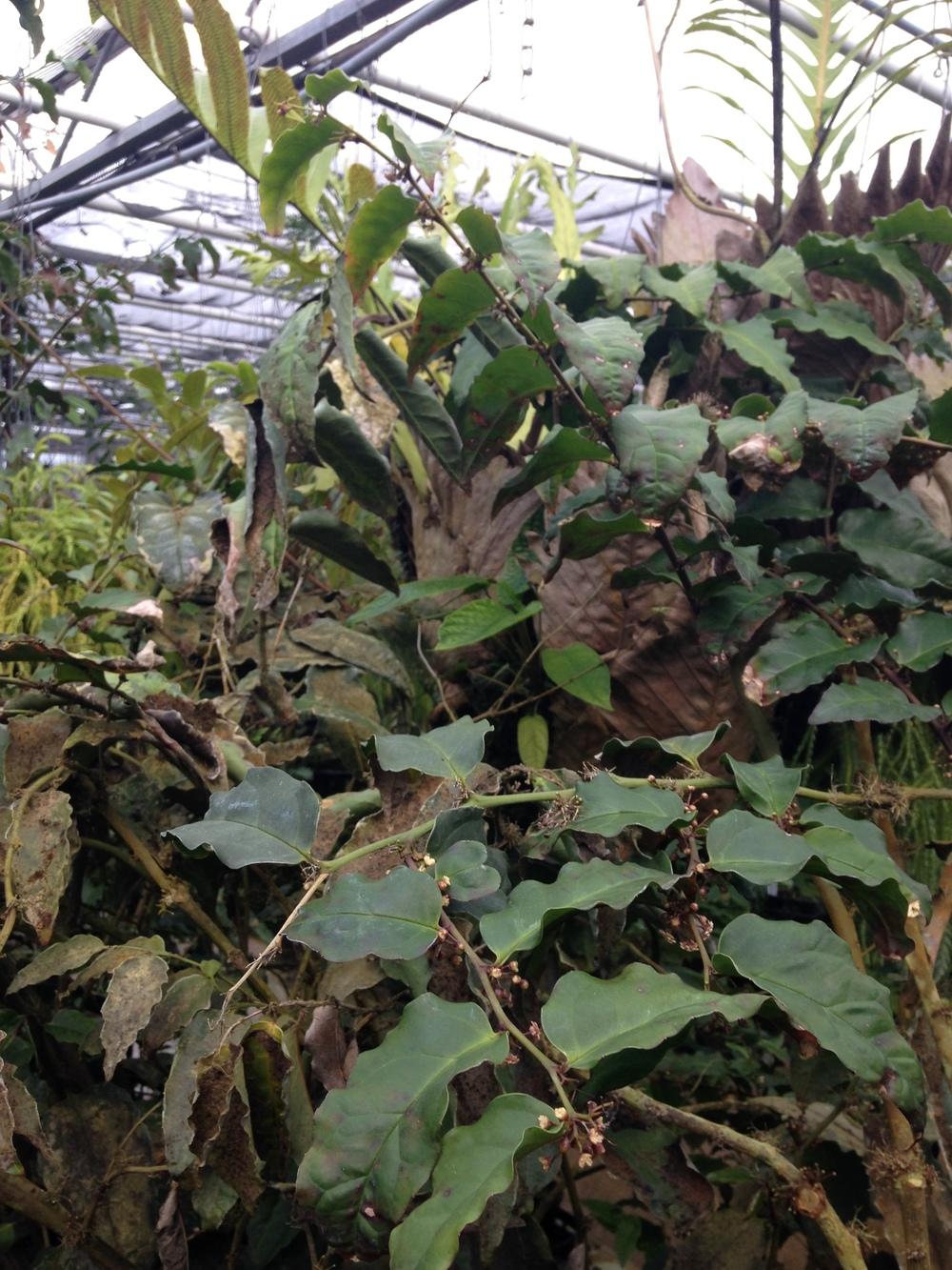 Meeting Amborella trichopoda — In Defense of Plants