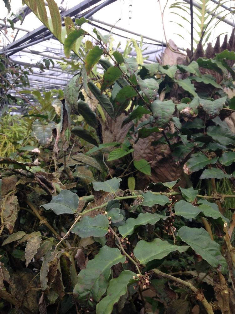 Meeting Amborella Trichopoda In Defense Of Plants