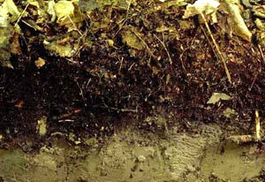 worm-free-soil-horizon.jpg