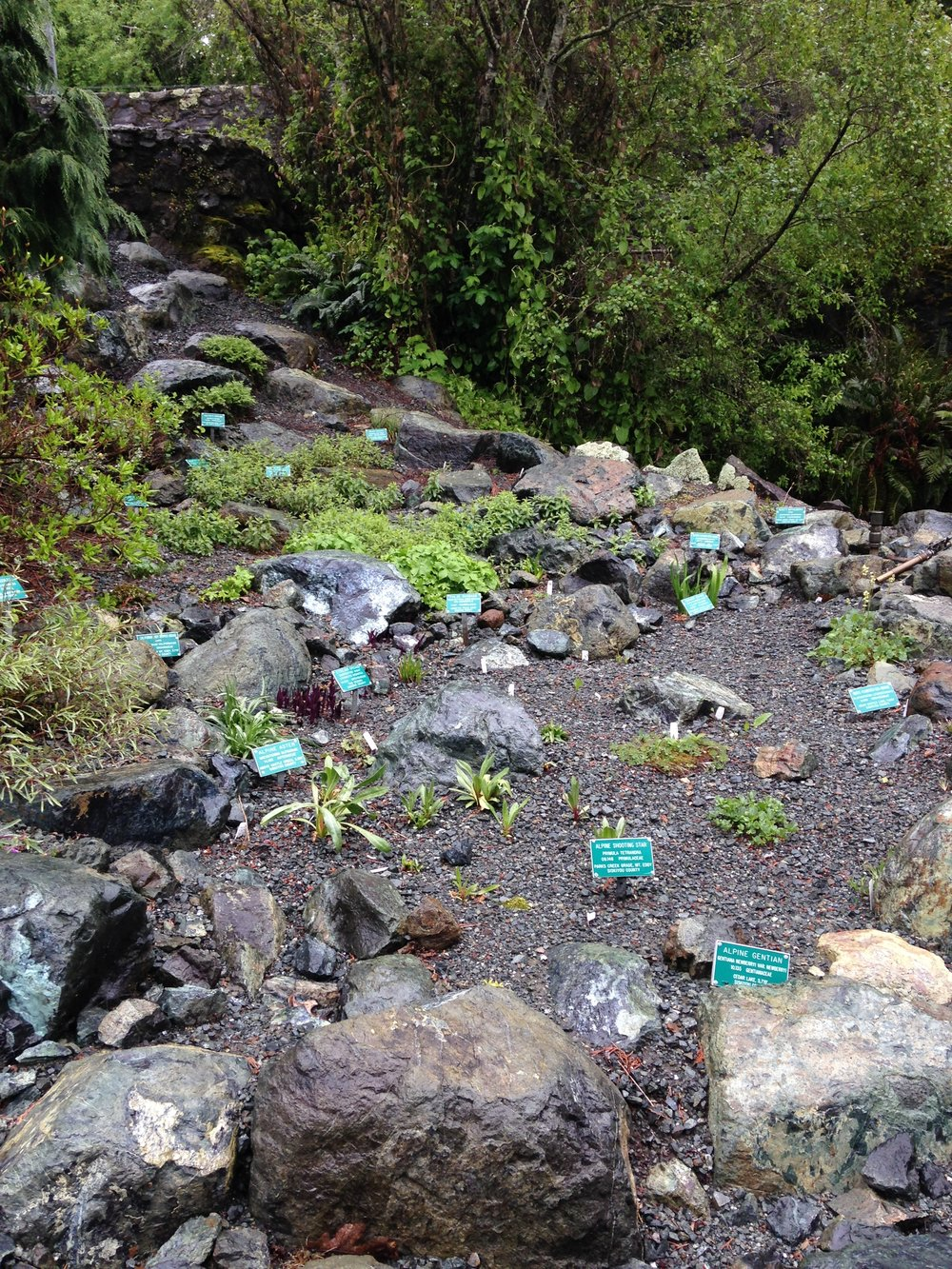 Serpentine Bog Garden