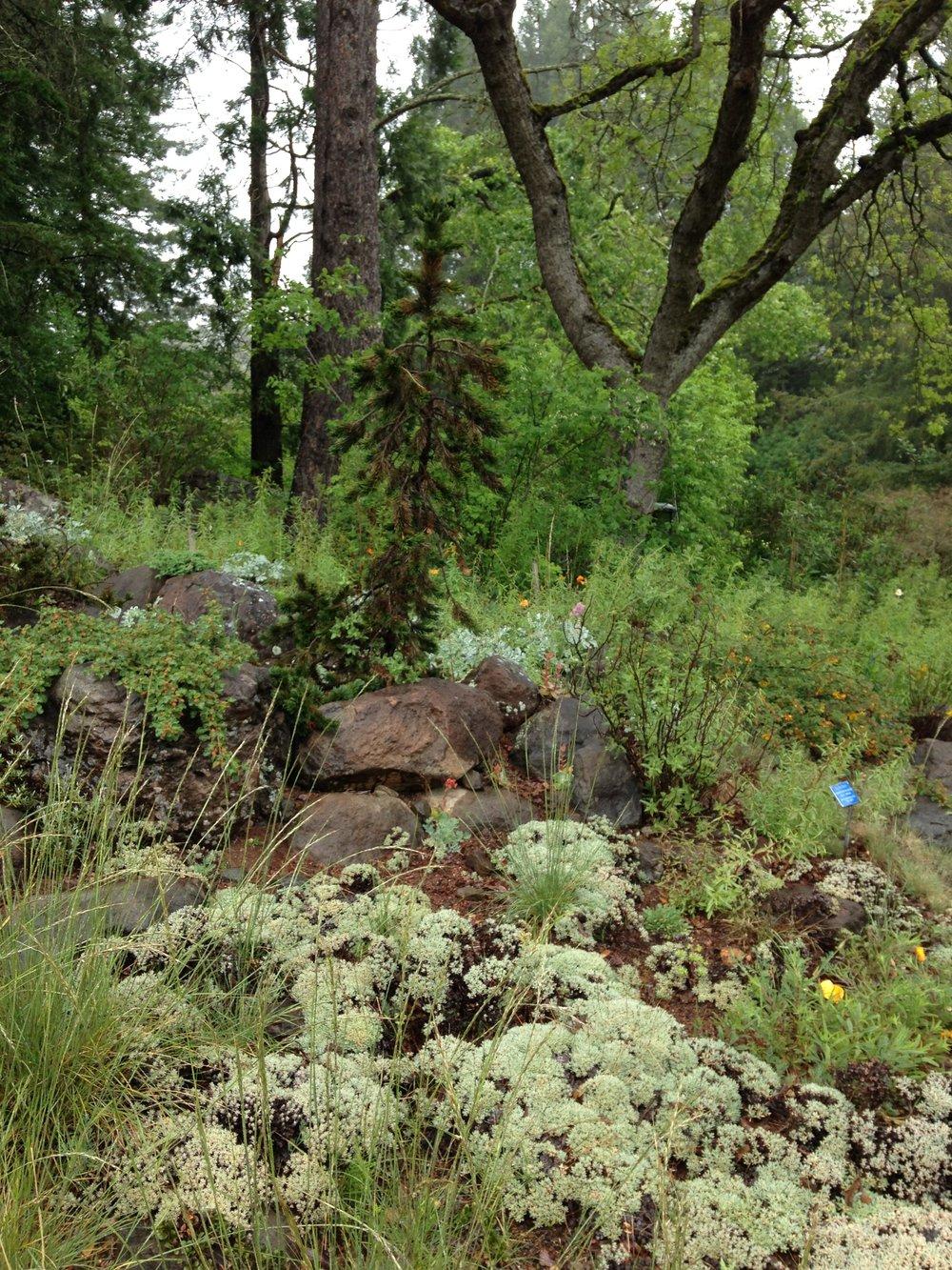 High Sierras Garden
