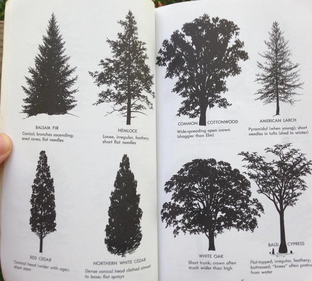 The fact that diagrams like these exist in tree guides is proof of the utility of this concept.