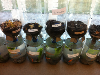 An example of the soda bottle terrariums