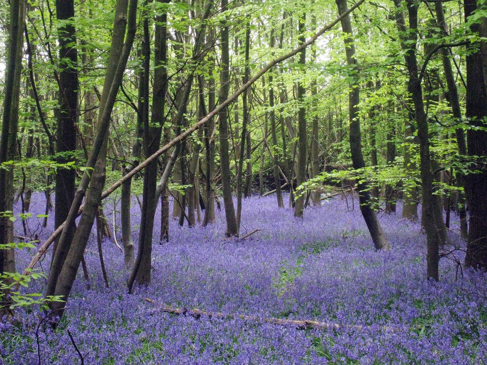 Little_Chittenden_Wood_-_geograph.org.uk_-_1861070.jpg