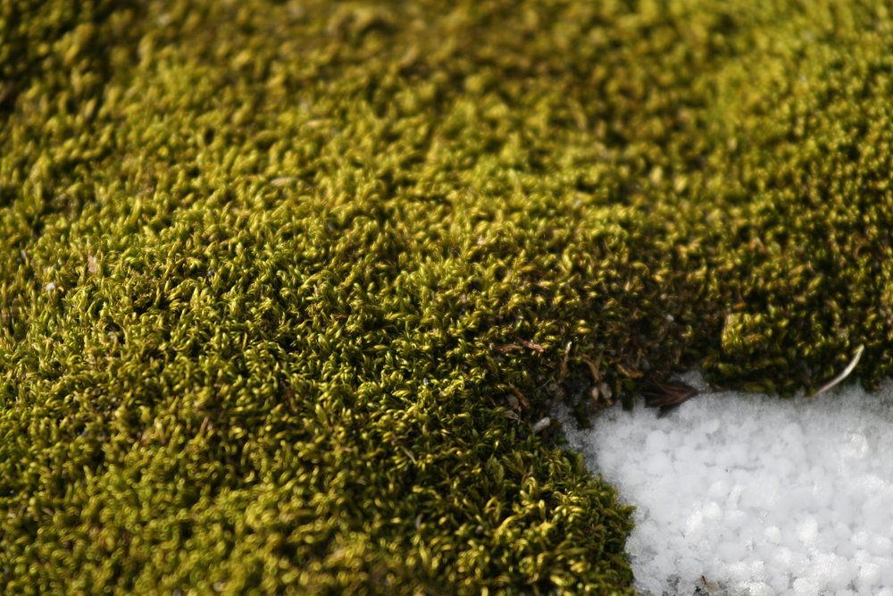 Moss_on_Aitcho_Island.jpg