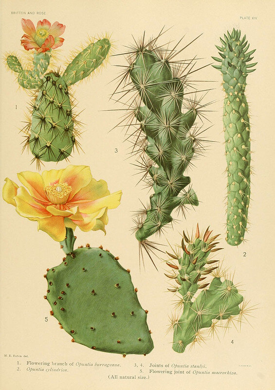 Ep. 195 - Chollas, Prickly Pears, and Biodiversity