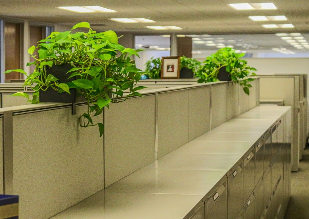 """What is a """"green"""" office? - Just as it sounds, a green office is one that fills it's empty spaces with plants, having a considerable amount of green areas. Having a green office will not only benefit your employee's moods, physical well-being, and reduce employee stress, a green office will improve your overall office productivity and help with reducing office noise levels."""
