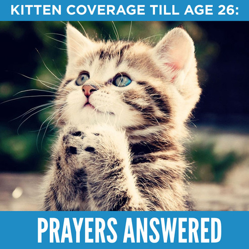 This kitten is so excited she can stay on her parents' insurance for a few more years.