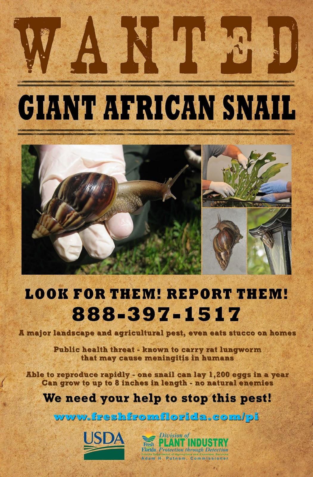 Giant African Land Snail Poster