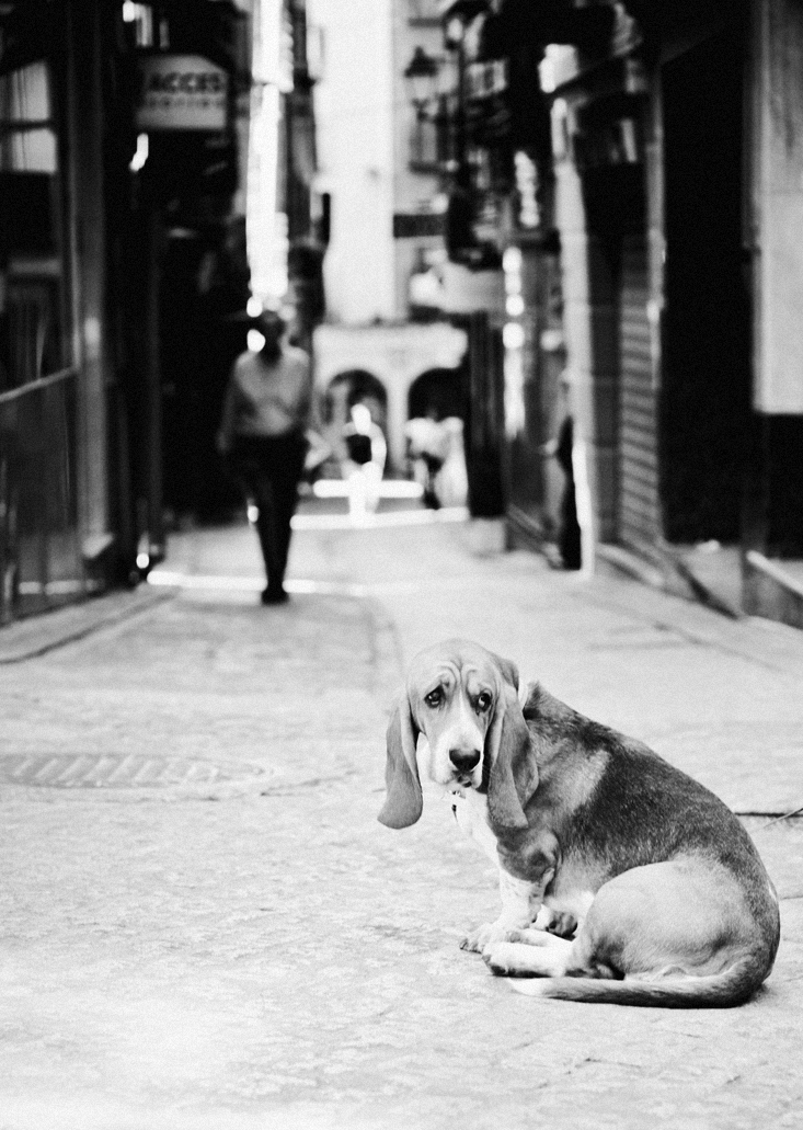 France Street Pet Photography