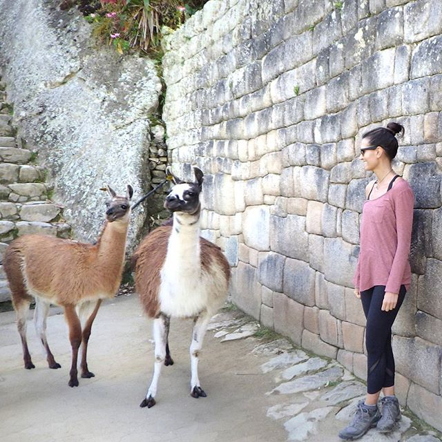 All I wanted to do was kiss a Llama. As soon as I got close enough, I got all awkward and weird🙈😣 Story of every 12 year old boys life...who's been in my shoes before🙋🙄 . . Machu Picchu, Peru