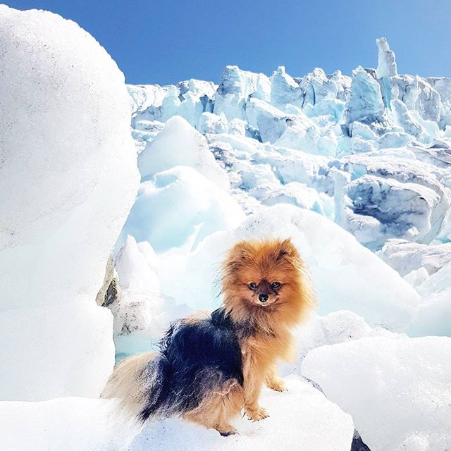 Those little legs need to be acknowledged for hiking 14 kms.  For taking massssive jumps and making it to the top of a glacier with pride. Nice work little miss🙆 . . Who else has an awesome little hiking buddy like @briannaand ?