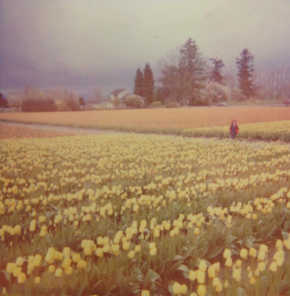 boy tulip.JPG