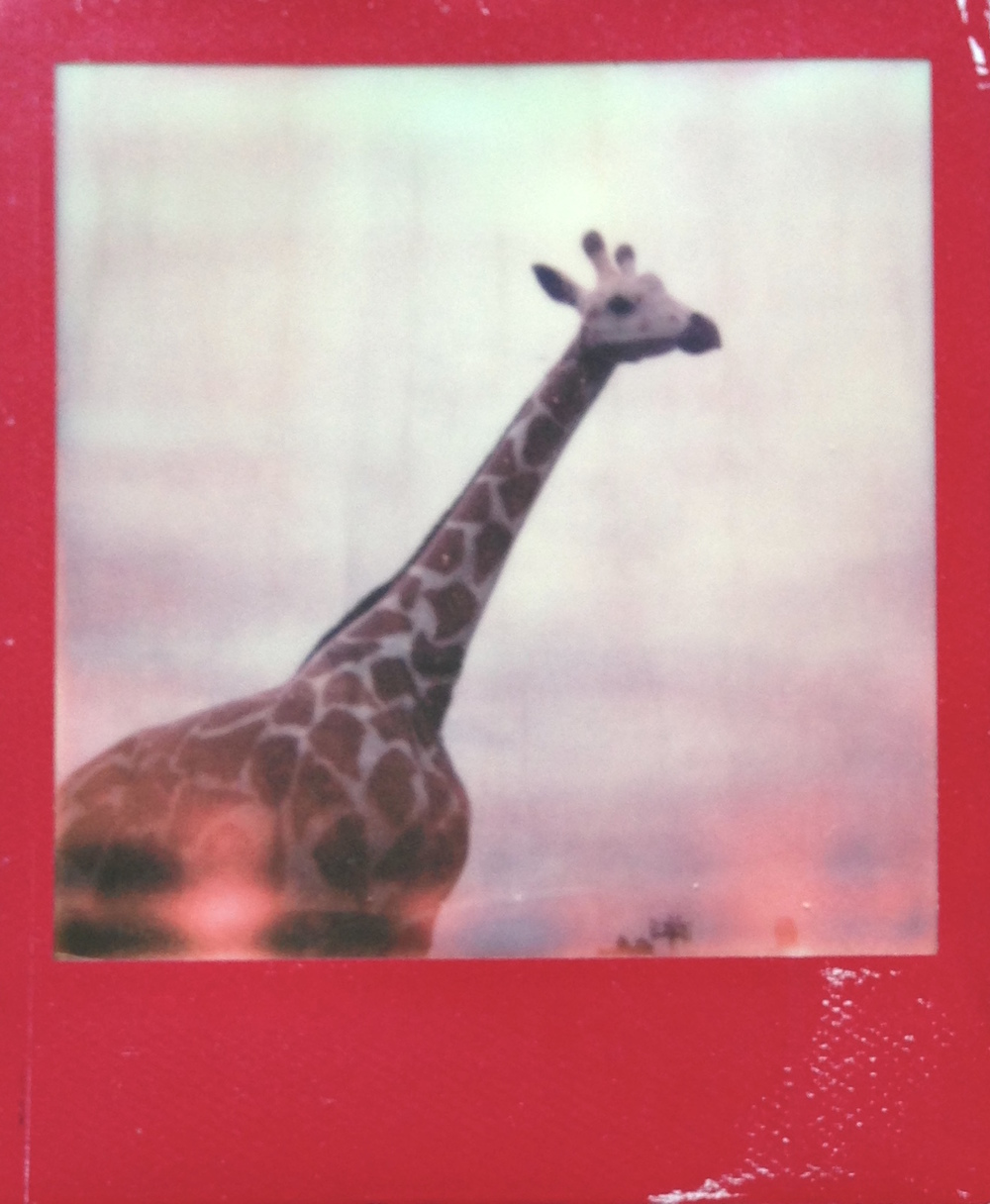 spirit animal polaroid color frame jvorwaller.JPG
