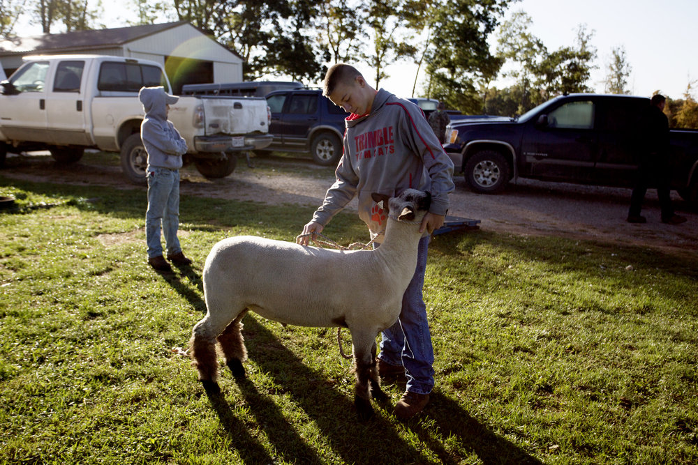 Weber and his show lamb, Captain, before grooming it at his farmyard.